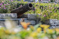 Plants in the rusty cannon Royalty Free Stock Images