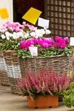 Plants for sale Stock Photos