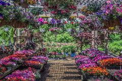 Plants for Sale in a Local Nursery Royalty Free Stock Images