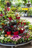 Plants for sale in nursery Royalty Free Stock Image