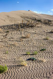 Plants in sand at Bruneau Dunes. Stock Images