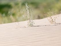 Plants in the sand in the desert.  Stock Photo