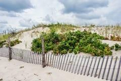 Plants on the Sand Dunes Stock Photos