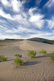 Plants in the sand under the sky. Stock Photography
