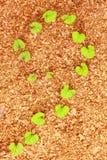 Plants on sawdust Royalty Free Stock Photos