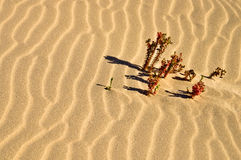 Plants on the sea of desert sands Stock Photos