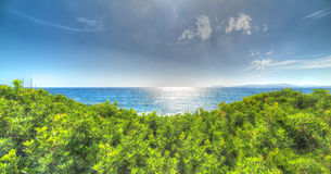 Plants and sea Royalty Free Stock Image