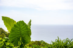 Plants and sea Stock Image