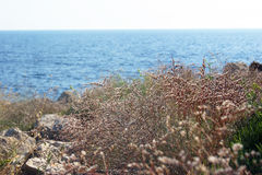 Plants on the seashore Royalty Free Stock Images