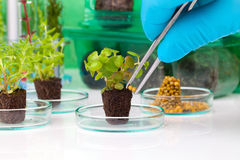 Plants, seedlings Stock Photo