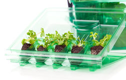 Plants, seedlings for transportation  in plastic box Royalty Free Stock Photo