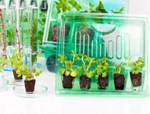 Plants, seedlings for transportation  in plastic box Stock Photography