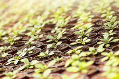 Plants seedlings under the sunlight Stock Images