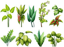 Plants Royalty Free Stock Photography