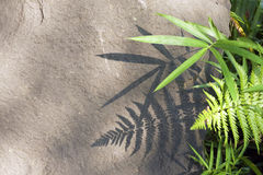 Plants shadow Royalty Free Stock Photography