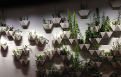 Plants Shape garden Royalty Free Stock Photos