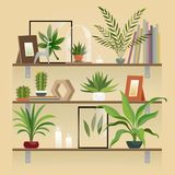 Plants on shelf. Houseplants in pot on shelves. Indoor garden potted planting, home decoration elements vector royalty free illustration
