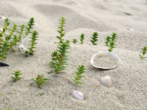 Plants and Shells1. Very small sea shells and green plants on the sand Royalty Free Stock Photo