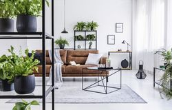 Plants on shelves in white natural flat interior with table on carpet in front of leather couch. Real photo. Concept stock images