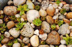 Plants among the shingle Stock Images