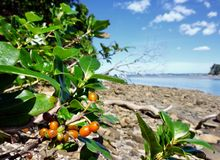 Plants at a shore. In Wenderholm Regional Park near Auckland Royalty Free Stock Image