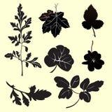 Plants silhouettes Stock Photos