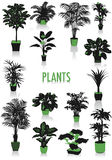 Plants silhouettes Stock Image