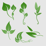 Plants silhouettes Royalty Free Stock Photo