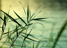Plants silhouettes green background Royalty Free Stock Photos