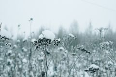 plants in a snow-covered field, Beautiful winter landscape with snow,copy space stock photography