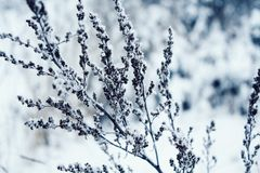 plants in a snow-covered field, Beautiful winter landscape with snow,copy space royalty free stock photos