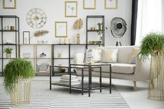Plants in sophisticated living room. Interior with black table and sofa against shelves with gold leaves Royalty Free Stock Images