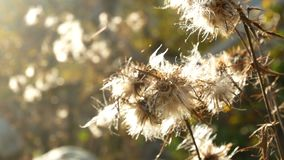 Plants spider field sun. Plants and the spider weaves morning in the field stock video footage
