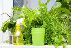 Plants and sprayer on windowsill Royalty Free Stock Photography