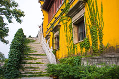 Plants spread on the stair and building surface Stock Photo