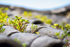 Plants sprouted through tile roof of traditional Chinese house Royalty Free Stock Images