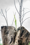 Plants sprouting stumps Royalty Free Stock Photos