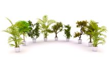 Plants standing semicircle Stock Photography