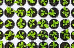 Plants starting to grow Stock Image