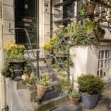 Plants on the steps of a house entrance in Amsterdam Netherlands. March 2015. Squared format stock images