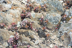 Plants in stone desert Royalty Free Stock Photography
