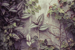 Plants and stone wall royalty free stock images