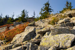Plants on the stones. High up Carpathians mountains Stock Photos