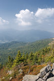 Plants on the stones. High up Carpathians mountains stock photography