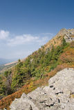 Plants on the stones. High up Carpathians mountains royalty free stock photography