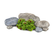 Plants and stones for garden decoration. 3d green plants and natural stones for garden decoration Stock Photography