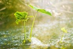 Plants on stream in eco green park Stock Photos
