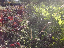 Plants in sunlight Stock Image