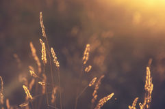 Plants at sunset with back light Royalty Free Stock Photography