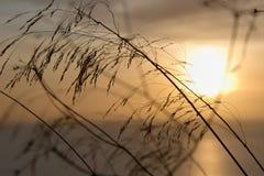 Plants on sunset Royalty Free Stock Image